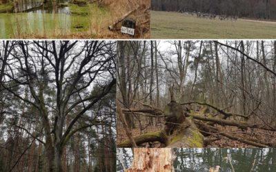 Tag des Waldes und Frühlingsanfang